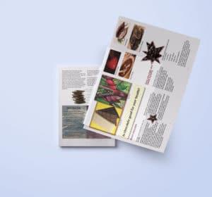 Editorial flyer