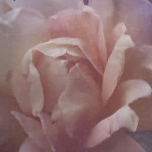 colourful_rose_filtered