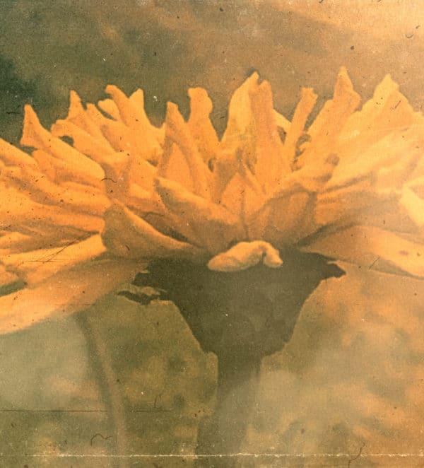 Orange Zinnia flower filter added.