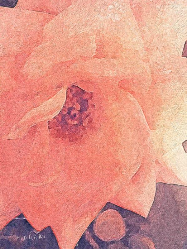 Peach Rose Colour