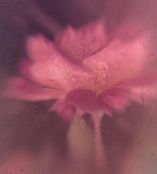 Pink Rose filter added.