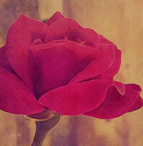 sweet_red_rose_artistic