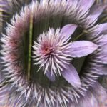 pink_crystal_fountain_clematis_originalHEIC