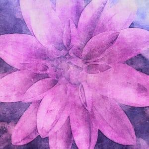 pink_dahlia_artistic