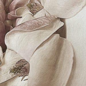 B&w Magnolia Artistic