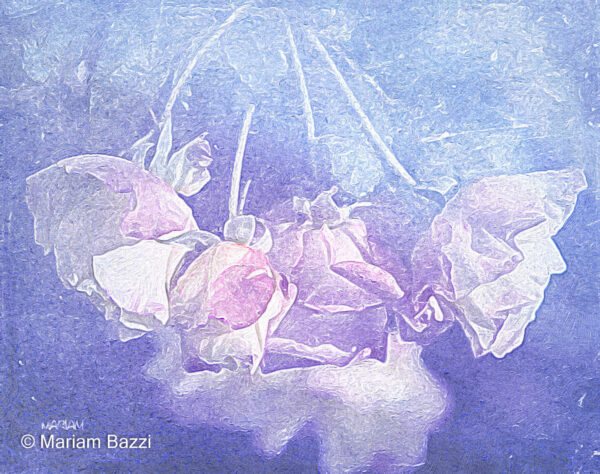 Double Delight Roses Artistic